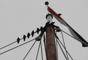 Starlings in the Rigging